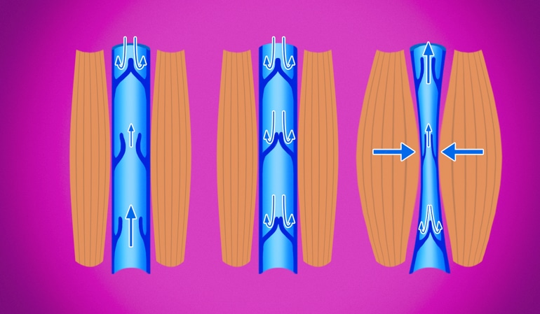 Slika zdrave vene koja pokazuje normalnu vensku kompresiju koja pomaže cirkulaciju krvi nazad k srcu